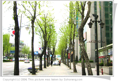 20040510_photo_treeroad.jpg